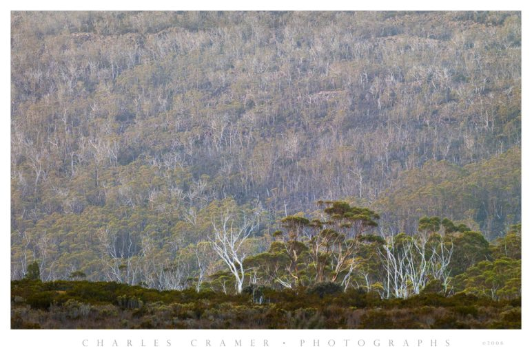 Wombat Moor, Mt. Field National Park, Tasmania, Australia