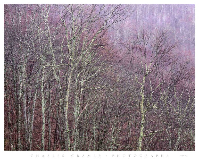 Trees against Hillside,  Blue Ridge Parkway