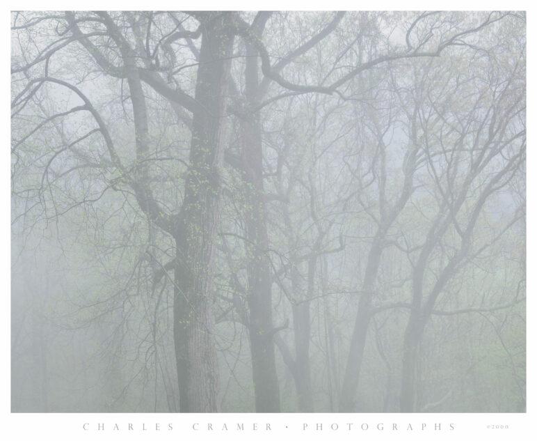 Foggy Day, near Newfound Gap, Great Smoky Mountains National Park