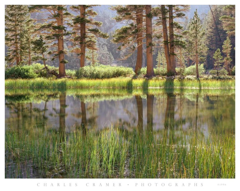 Trees and Pool, Arrowhead Lake, Kings Canyon