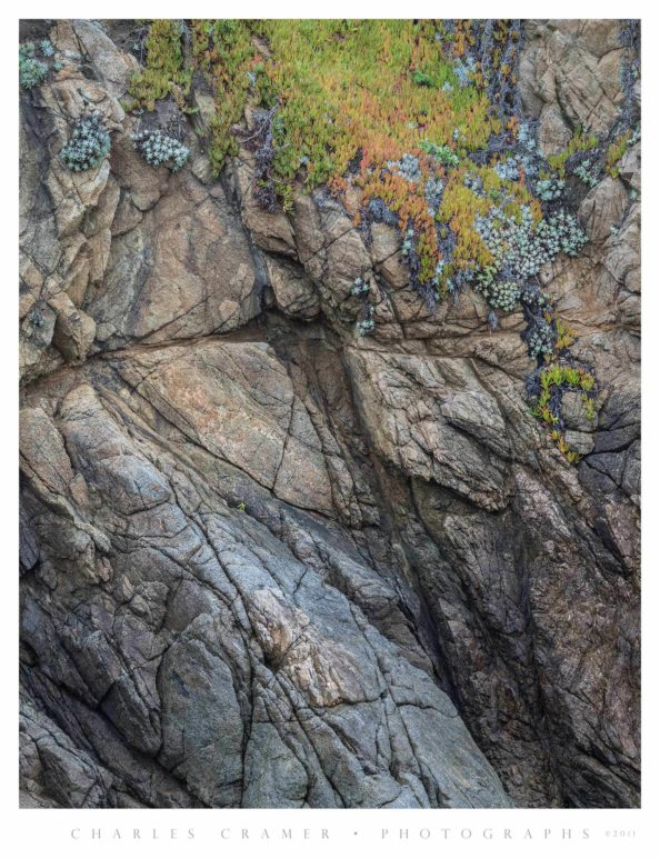 Hanging Iceplant, Cliff Face, Point Lobos
