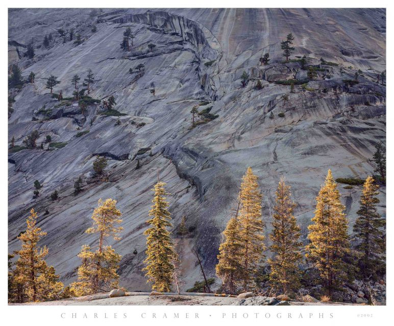 Pines and Granite, Merced River Canyon, Yosemite