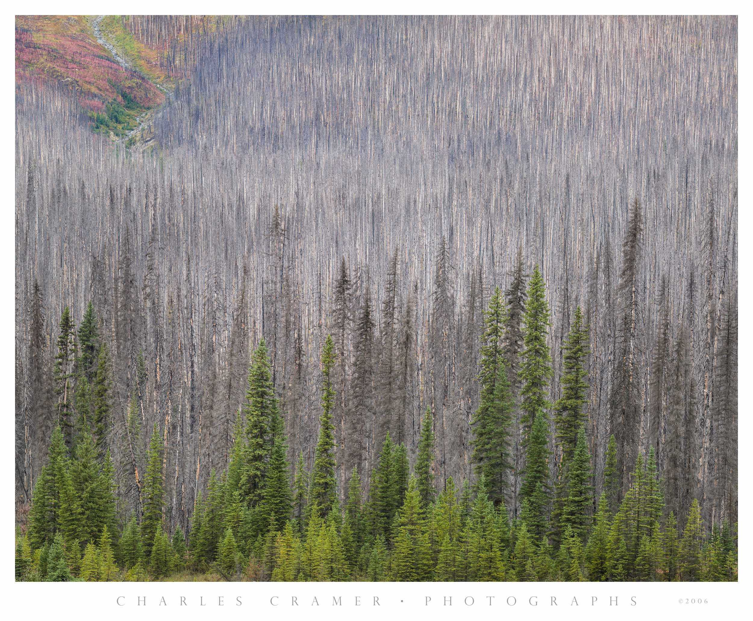 Burned Forest #2, Kootenay National Park, Canada