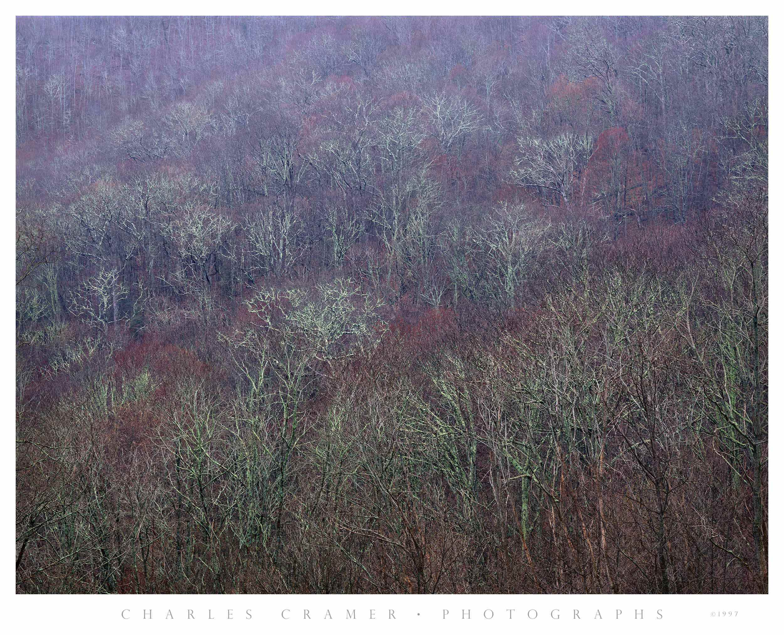 Tree-covered Hillside,  Early Spring,  Blue Ridge Parkway