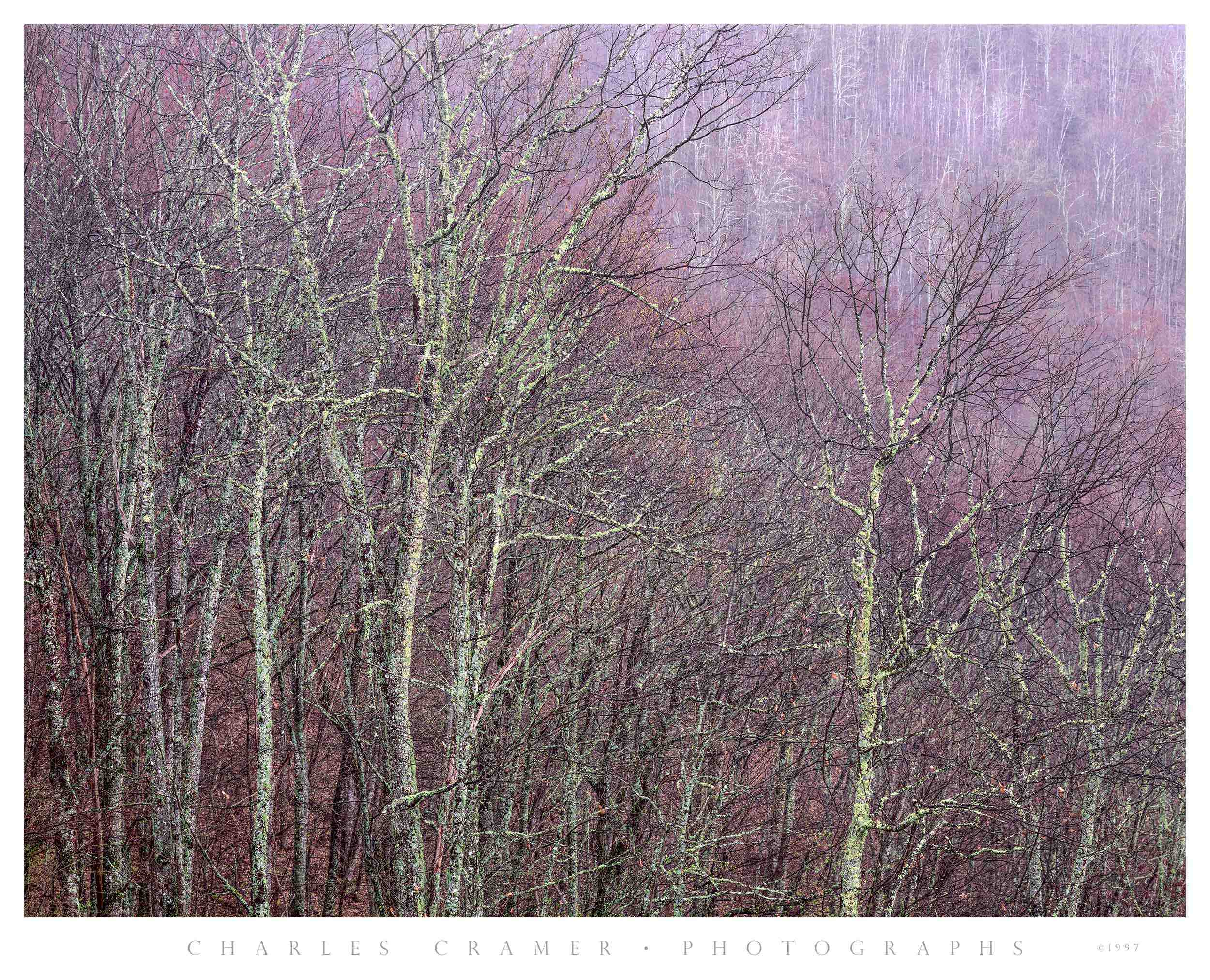 Trees against Hillside,  Blue Ridge Parkway