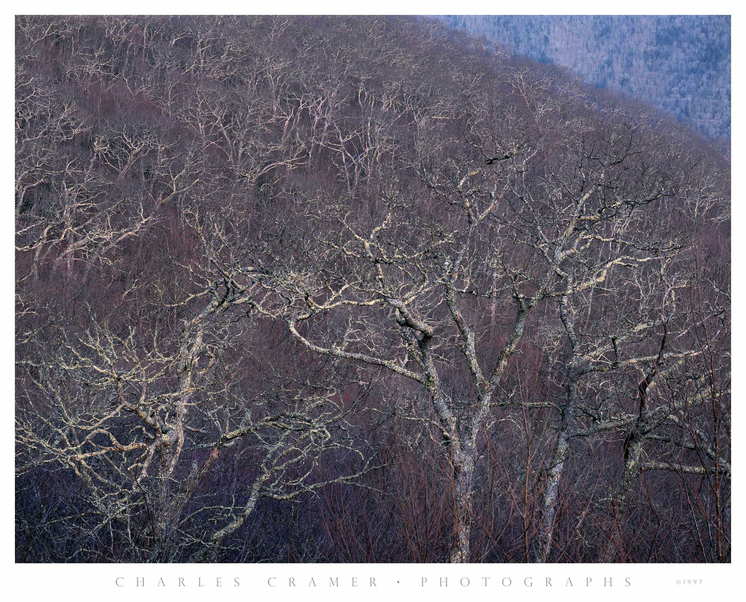 Sea of Trees, Early Spring, Blue Ridge Parkway