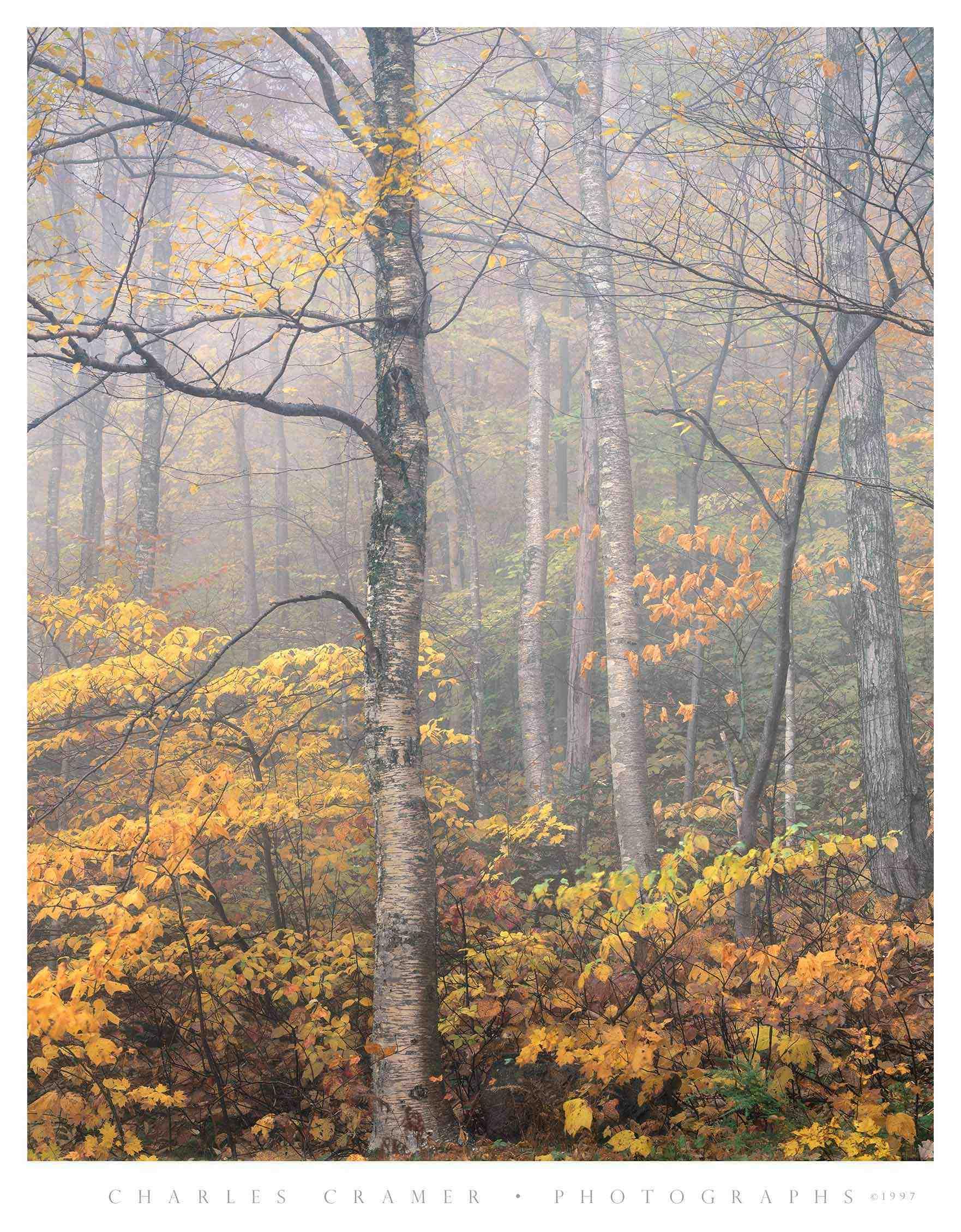 Autumn Fog, White Mountains, New Hampshire