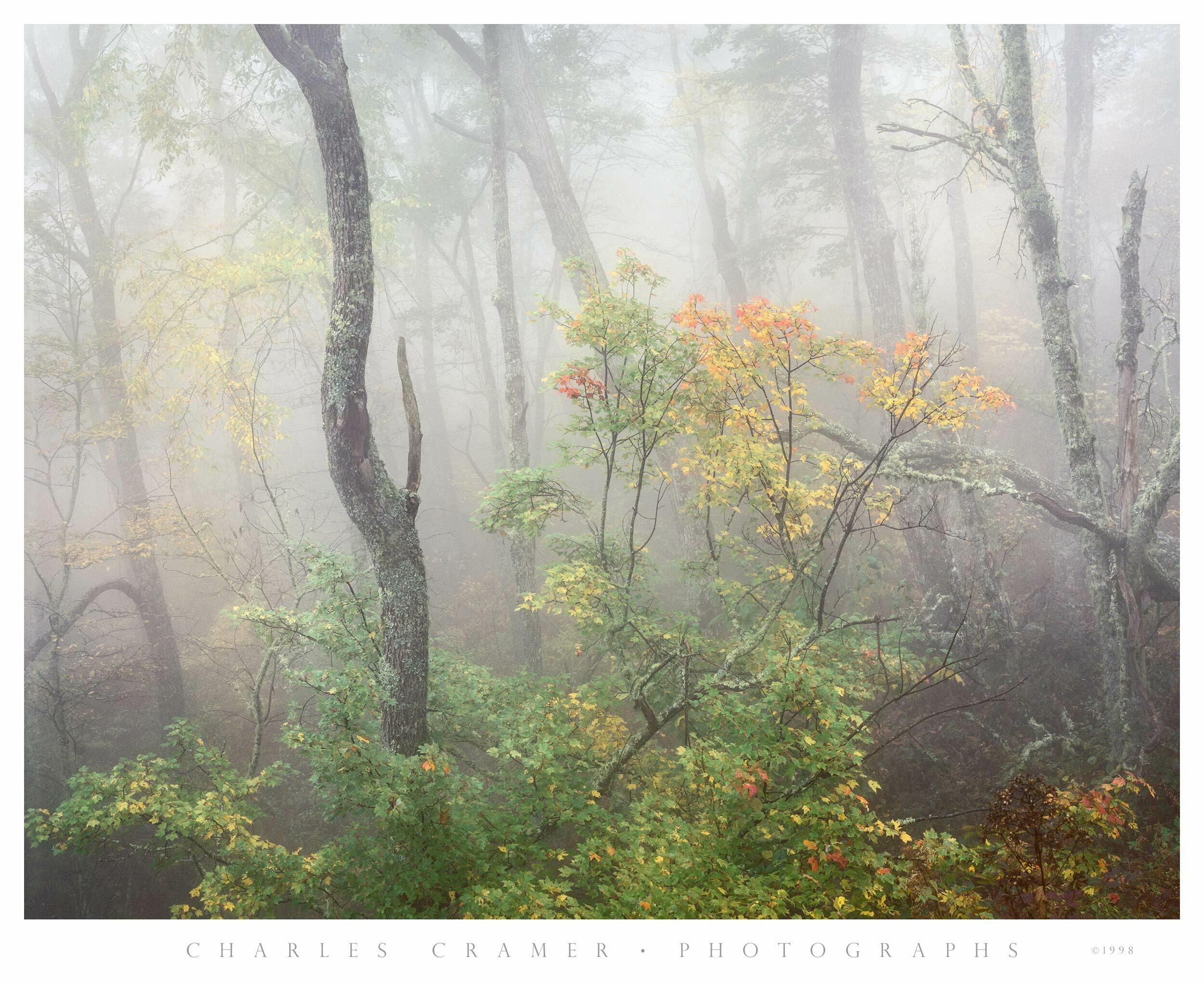 Fog and Trees, Autumn, Blue Ridge Parkway