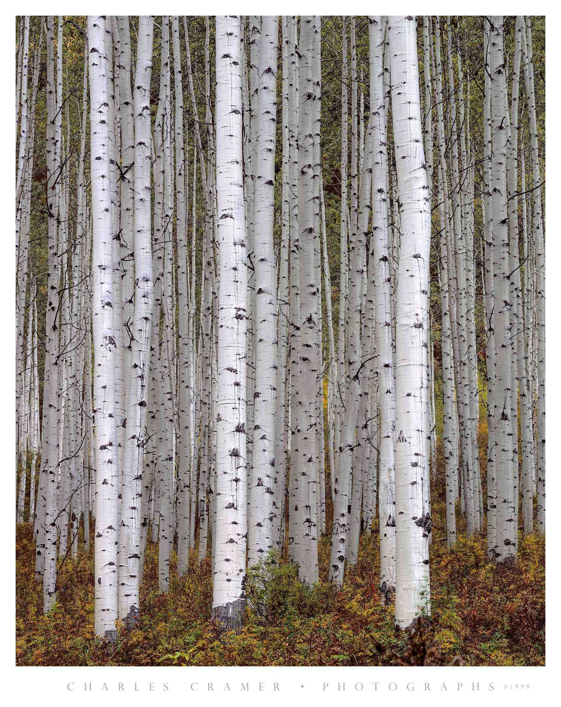 Bright Aspen Trunks, Aspen, Utah