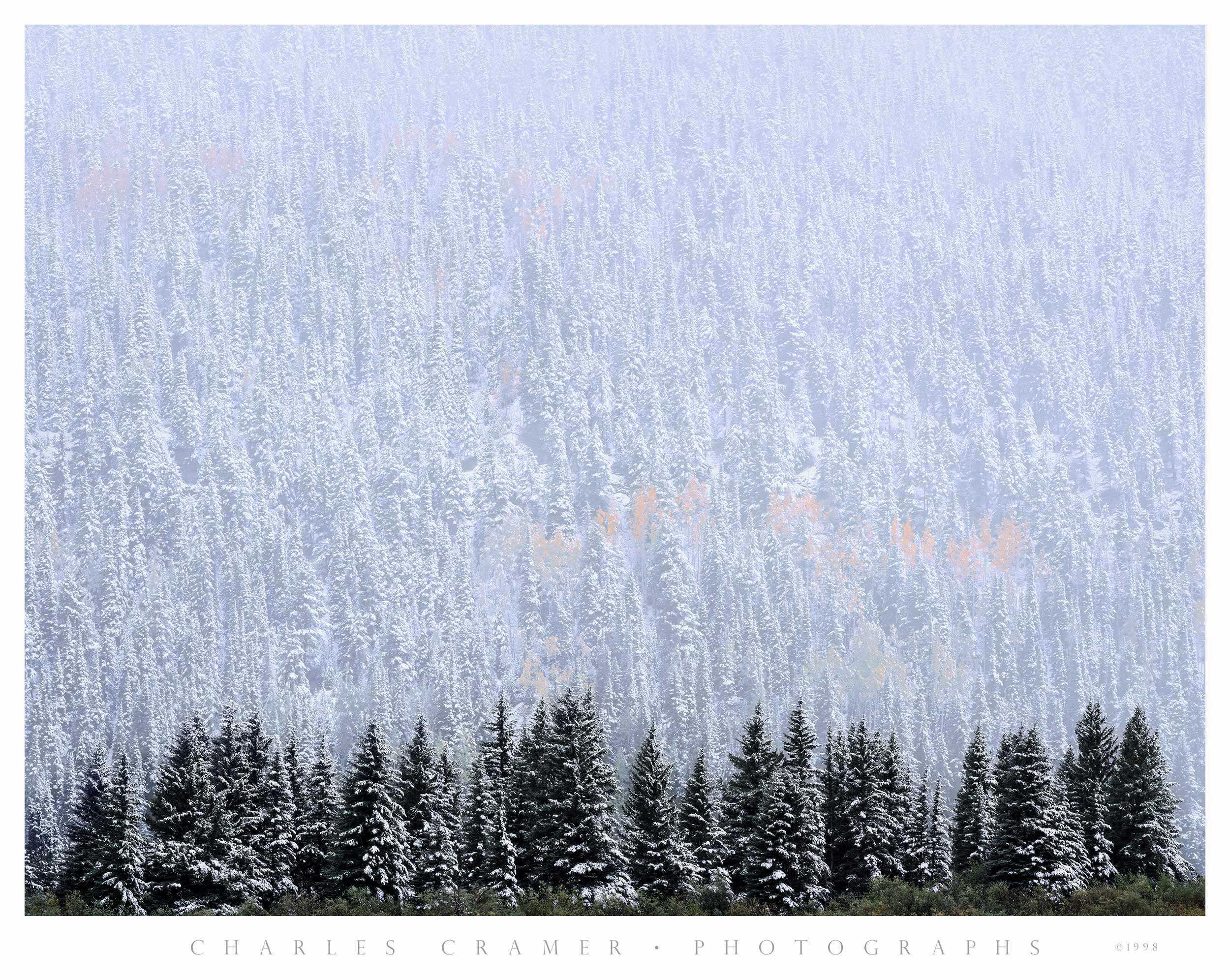 Evergreen and Aspen, Autumn Snow, near Telluride, CO