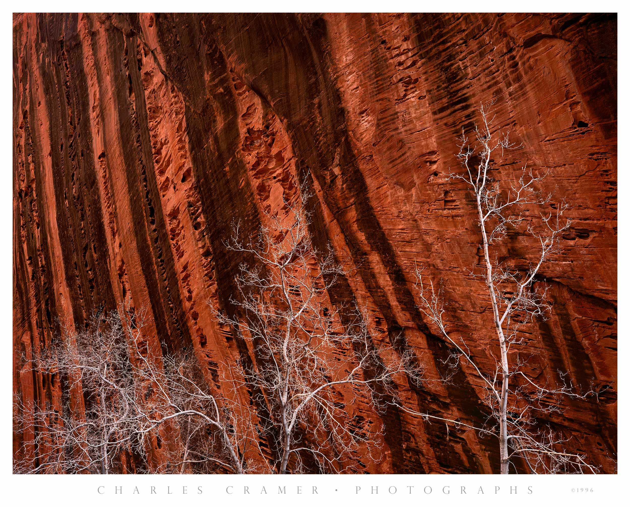 Budding Trees, Spring, Kolob Canyon, Zion