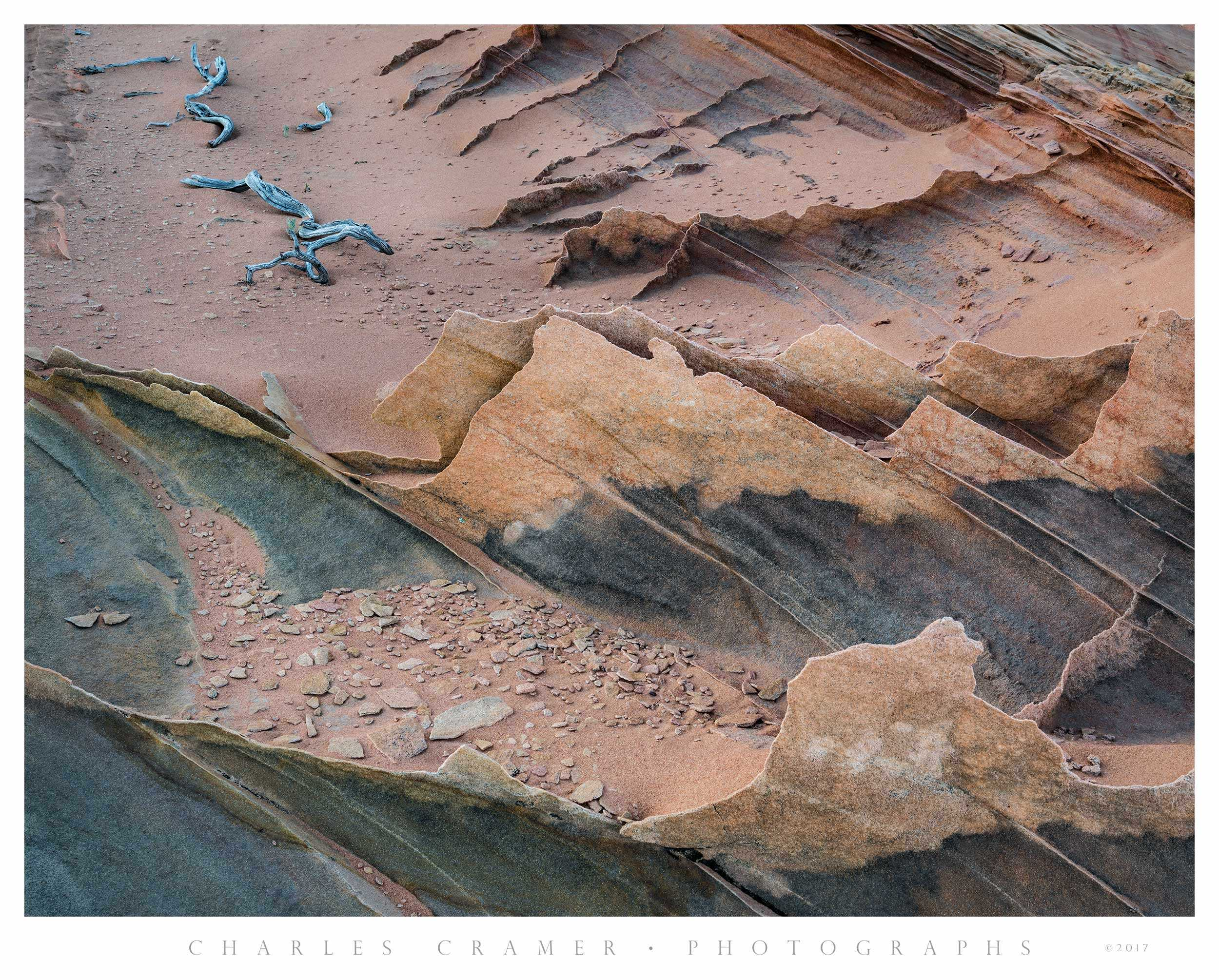 Fins and Snags, Paria Wilderness, Utah
