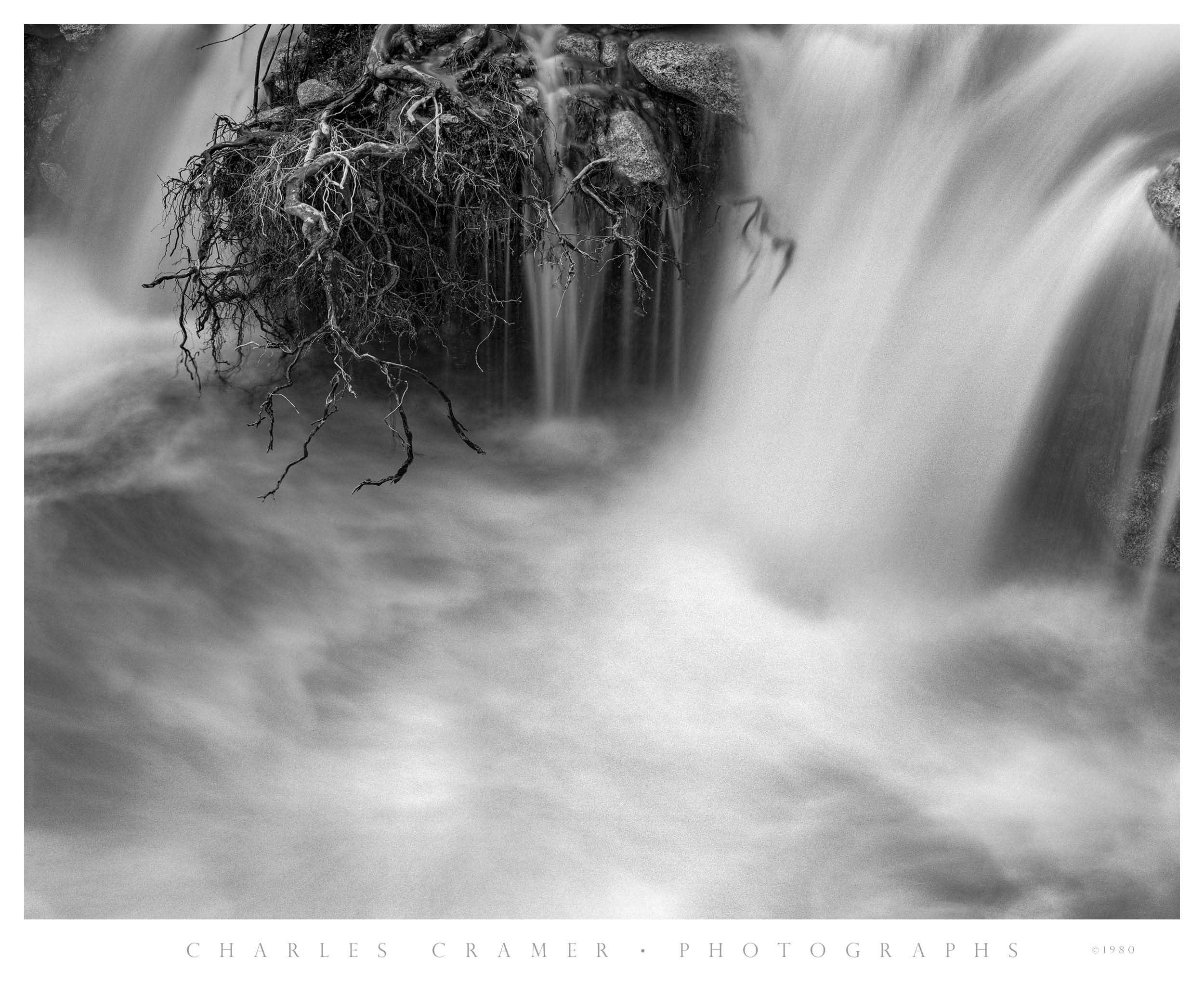 Exposed Roots, Merced River, Yosemite
