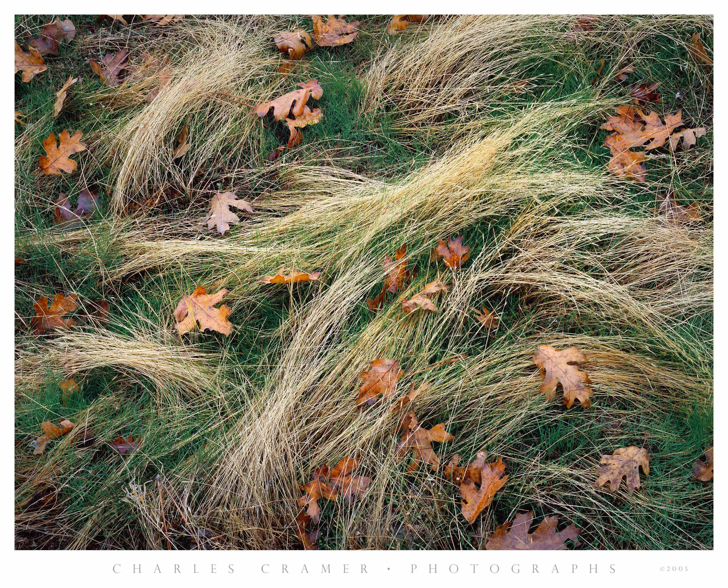 Leaves and Grasses, Fall, Yosemite