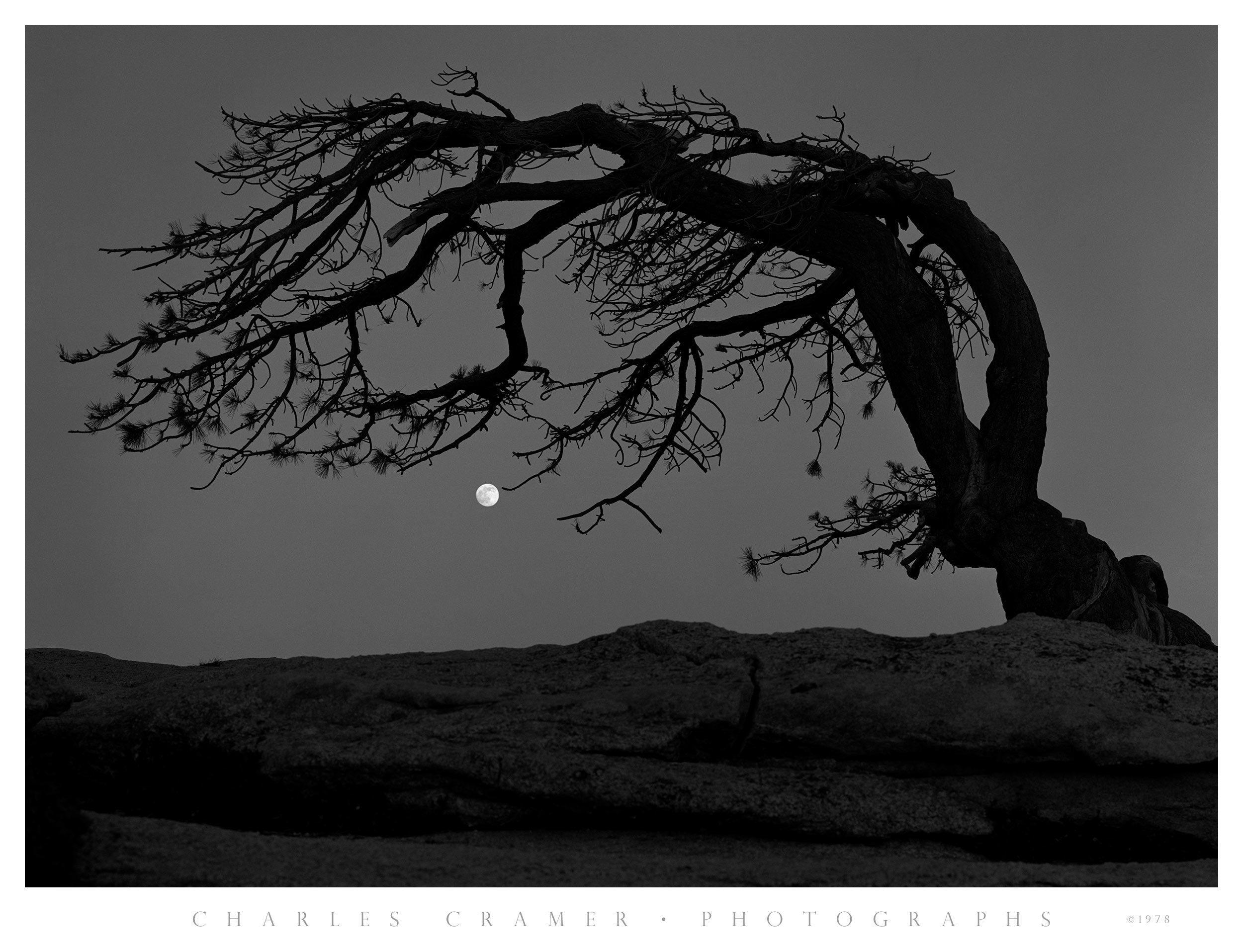 Moon, Jeffrey Pine, Sentinel Dome, Yosemite