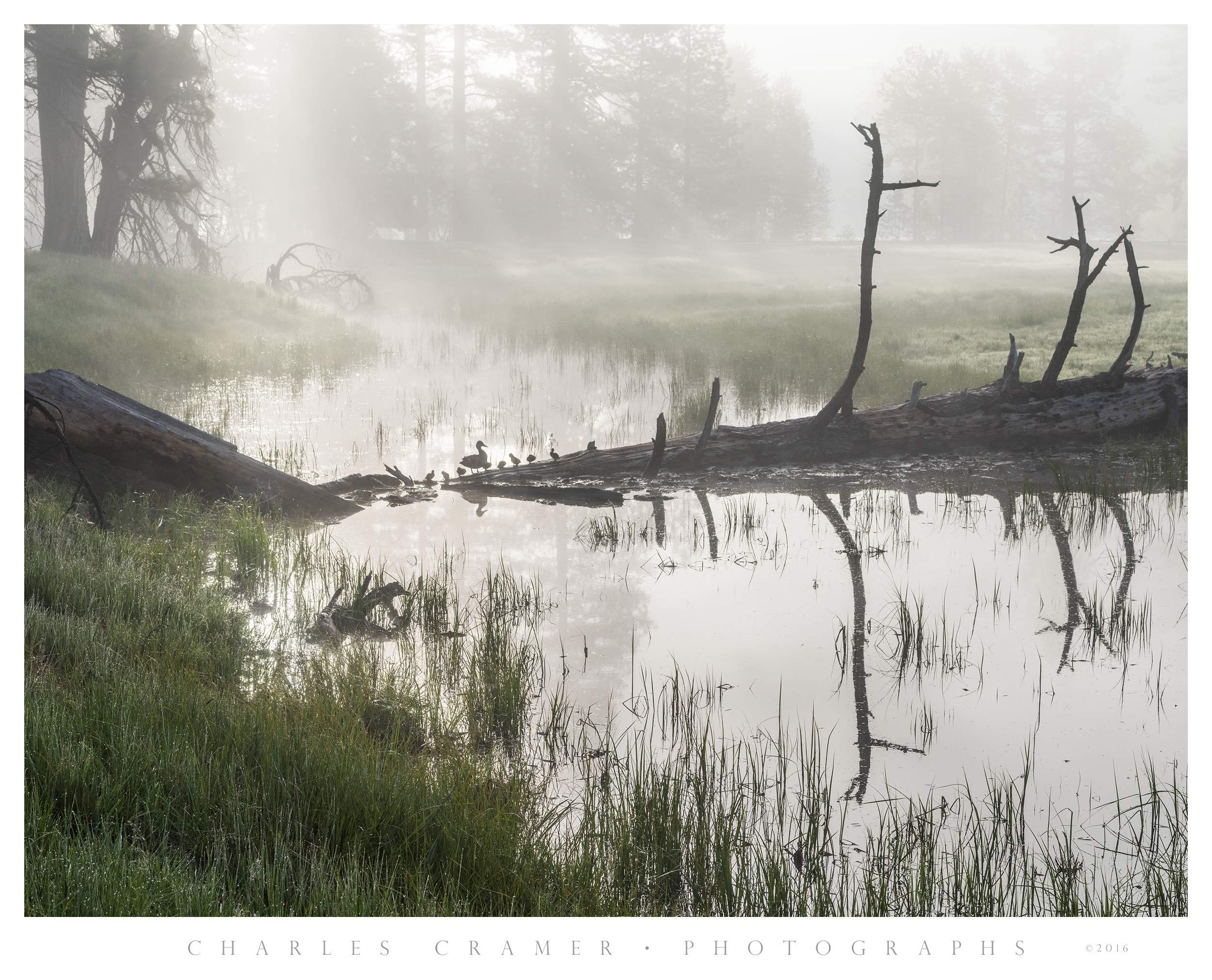 Fallen Log and Pond, Ducks, Sentinel Meadow, Yosemite